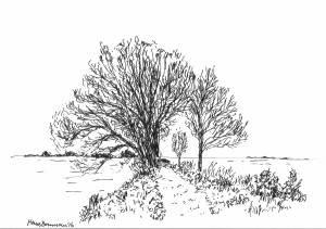Dijkje met bomen / dike with trees
